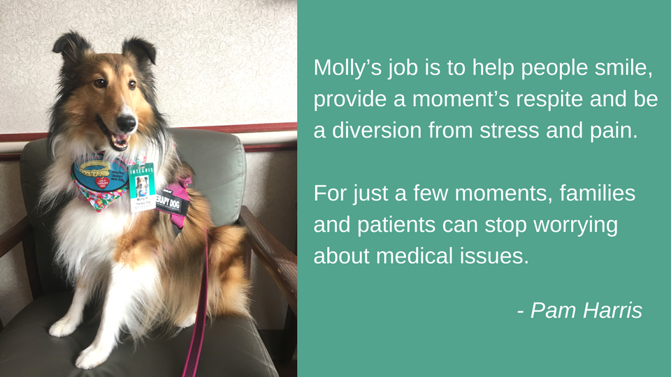 Molly the therapy dog infographic